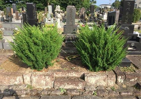 墓所内の樹木撤去