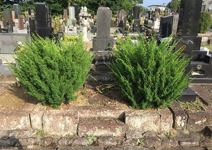 墓所内の樹木撤去1